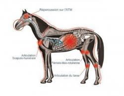 Répercussions sur les chevaux