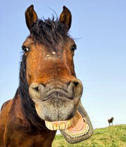 Dentiste pour chevaux près de Redon